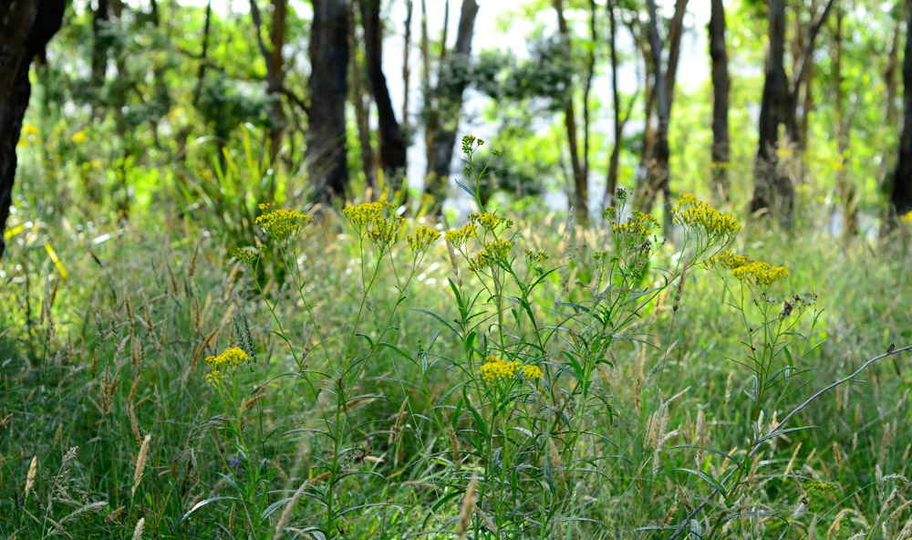 trees-nature-grass-native-klb_0634